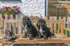 Home Farm Holiday Cottages in Somerset