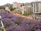 Funchal Holiday Apartment
